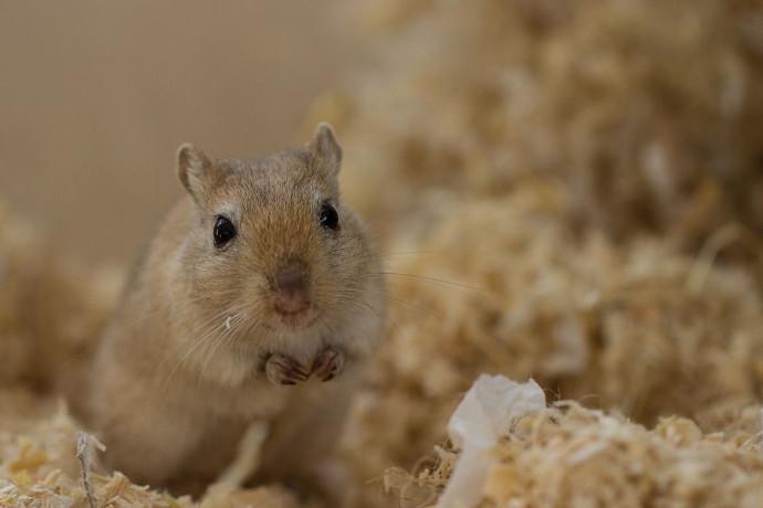 2016-04-21 Daños en el hígado de ratones tras 13 días en el espacio