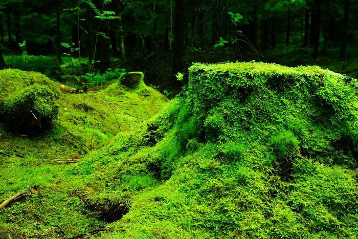 La Tierra es ahora más verde que hace 34 años