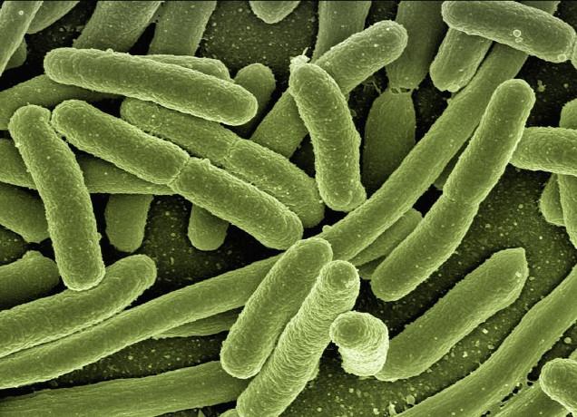 2016-05-29 Infectada por una superbacteria resistente a los antibióticos más potentes
