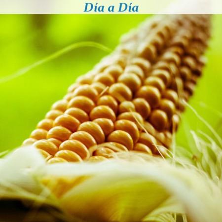 "El maíz Bt un transgénico ""español"""